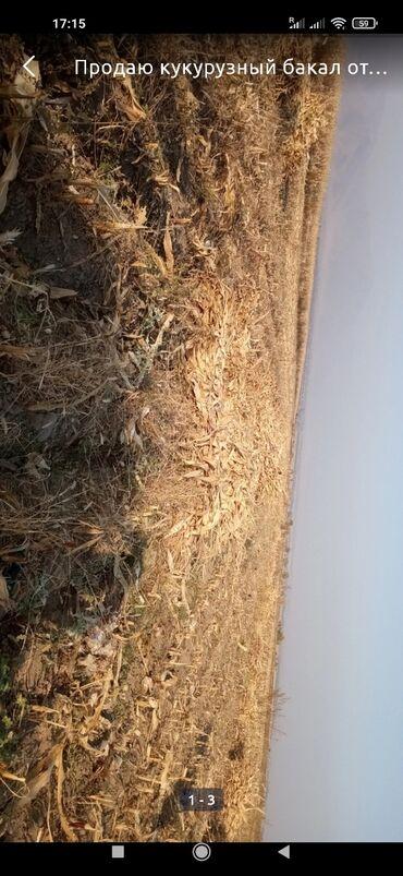 Кукуруза (бакал) срочно, не дорого