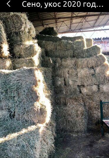 microsoft 540 в Кыргызстан: Сено Продаю сено 2 кос тюки больше 200 сом есть 540 штук