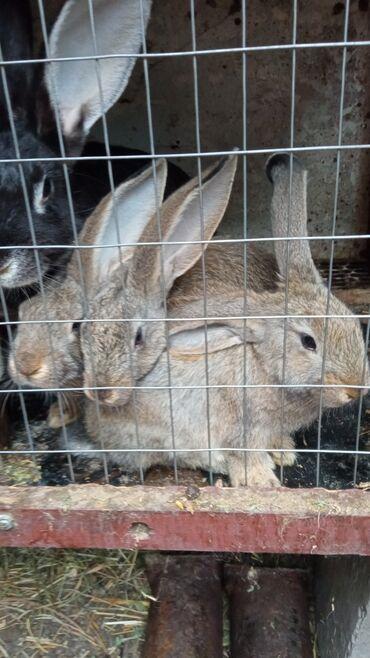 Кролики 2 месяца. Район Кудайберген