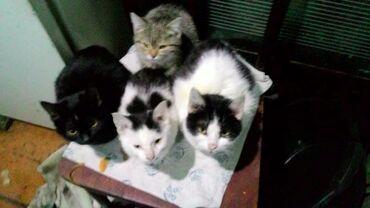 Бодики для мальчика - Кыргызстан: Очень срочно ищем дом для котят подростков. Возраст 3 месяца есть