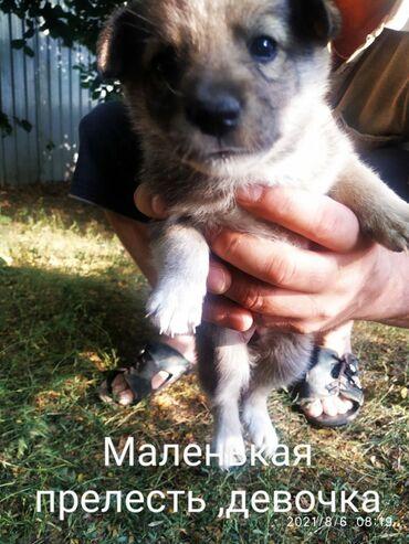 55 объявлений | ЖИВОТНЫЕ: Маленьких щеночков просто выбросили на улицу . Срочно надо найти им до