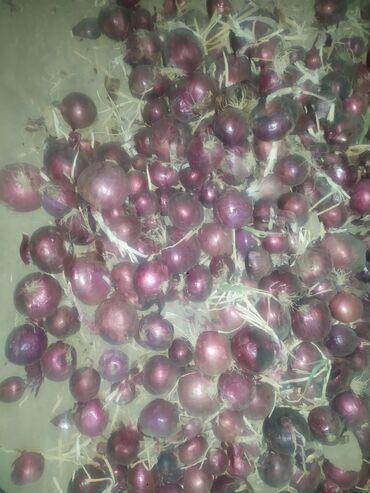 4578 объявлений: Продаю фиолетовый лук сорт Гавриш Размеры почти стандарт