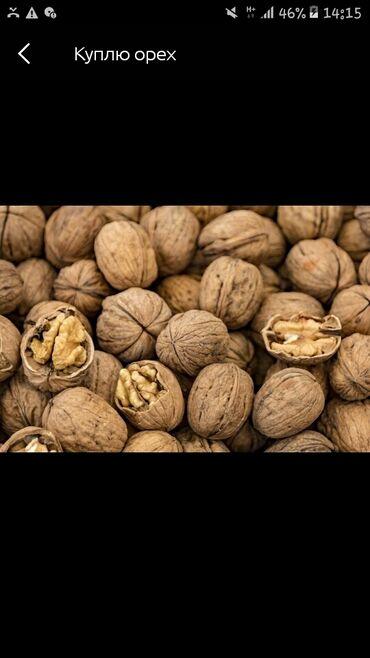 Продаю грецкие орехи в наличи 100 кг  В этом году  Обмен не интересует