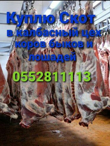 животн в Кыргызстан: С/х животные