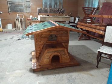pisik-satisi - Azərbaycan: Pisik evi