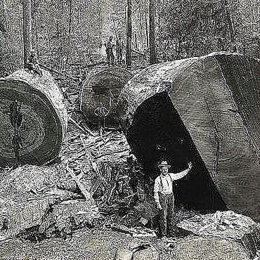 Лес доска сухая необрезная сосна пихта ёлка 55 мм 3 куба, 12т./