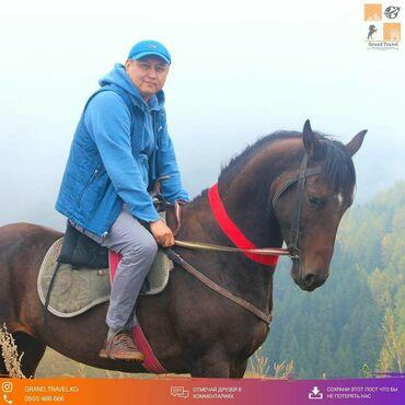 золотой лошадь пластырь цена в Кыргызстан: КОННЫЙ ТУР каждые выходные.МИР — ЭТО КНИГА . И КТО НЕ ПУТЕШЕСТВОВАЛ ПО