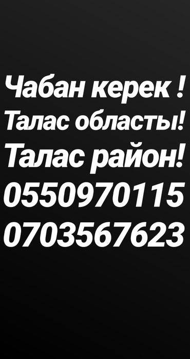 Чабан керек!!! в Бишкек