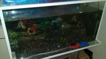 250 litrlik akvarium 10 növ balığ (xışnik),spiral,2 ədəd