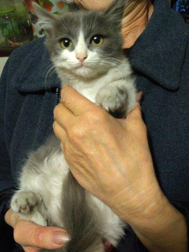 отдам котят даром в Бишкек