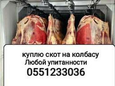 Прием в колбасный цех коров лошадей и т.д Прием скота в колбасный