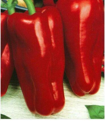 продажа семена в Кыргызстан: Продаю сладкий перец очень крупный месистый 100 пр горантия семена с