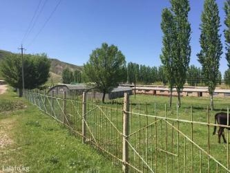 ферма-сарай теплица в селе кызыл туу, не далеко от города (30мин в Бишкек