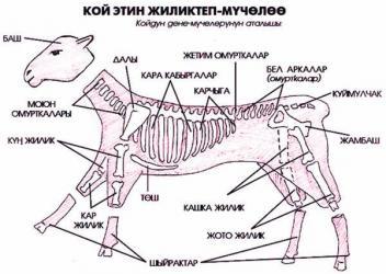 касапчы. (мясник). мал сойуу. станок. кой, жылкы, уй, бодо мал сою. в Бишкек