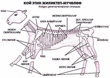 работа-мясником в Кыргызстан: Касапчы/ Мясник/ Касап / Мал союуэт бышырууустукандоо, чучук / казы