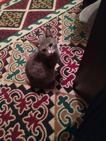 2694 объявлений: Возьму котенка, (девушке) любит котят обращается ласково