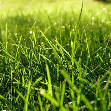 жидкий газон бишкек в Кыргызстан: Газон Сеем газон быстро профессионально качественно!!Немецкие