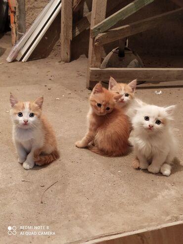 104 объявлений   ЖИВОТНЫЕ: Коты