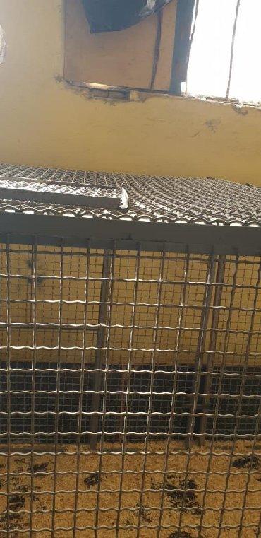 вольер для щенков в Кыргызстан: Вольер разборный. Для животных. Из нержавейки. 50 решёток. Размер