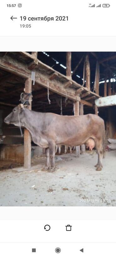 1125 объявлений: Кашкар кыштак