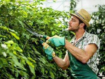 Работа в сша: садовник в Бишкек