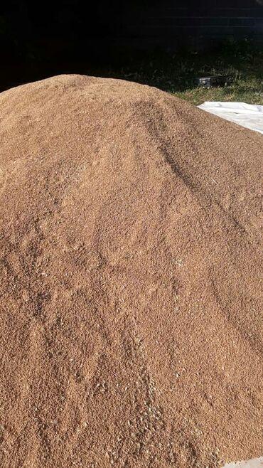 Животные - Кара-Балта: Продаю пшеница 8 тон