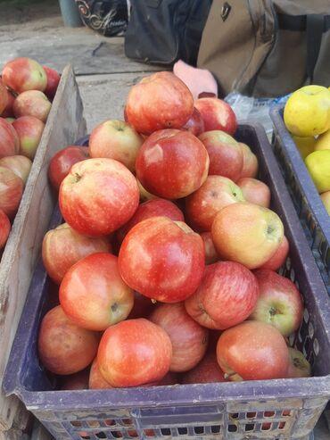 72 объявлений: Яблоки оптом много сортов