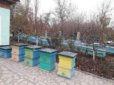 Другие товары для дома в Узген: Аары ящик 30 ш Аарыящик семясы менен (аарысы менен) срочно 2 корпусной