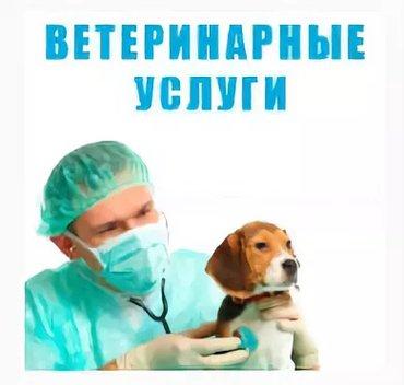 Услуги ветврача. вызов на дом. в Бишкек