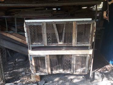 Крольчатник для содержания кроликов в Бишкек