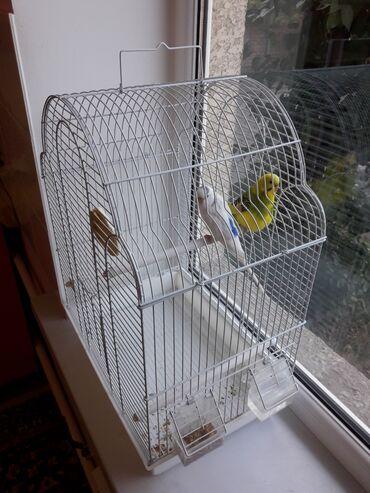 Животные - Пос. Дачный: Птицы