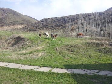 лошади бишкек в Кыргызстан: Продажа участков соток Для бизнеса, Собственник