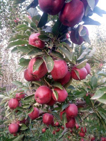 44 объявлений: Овощи, фрукты
