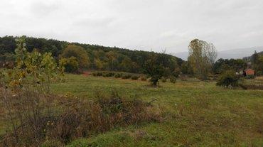 Poljoprivredno gazdinstvo sa 200 sadnica lesnika posed od 6 hektara ze in Zagubica