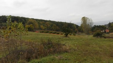 Poljoprivredno gazdinstvo sa 200 sadnica lesnika posed od 6 hektara ze - Zagubica