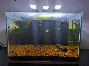 Продаю аквариум. Сделан под заказ. Длина 60 см, ширина 35 см, высота
