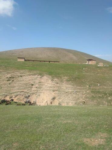мал-сарай в Кыргызстан: Продам. Ареннда . сарай. короо. ферма. кашара. жер. адрес: Кызыл-кыя