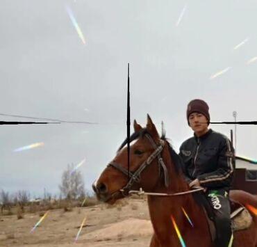 12 объявлений   ЖИВОТНЫЕ: Продаю   Конь (самец)   Полукровка   Конный спорт