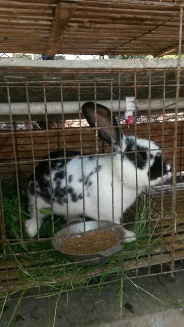 гор юст бишкек в Кыргызстан: Клетка для кроликов на 12 особей.с кормушками и автопоилками