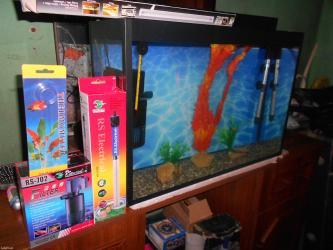 Bakı şəhərində Wekildeki akvarium herbir avadanliqlari ile tezedi