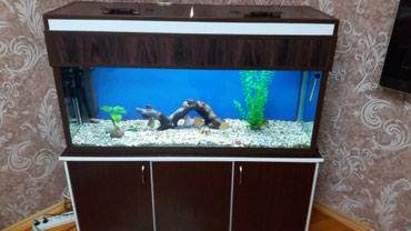 Bakı şəhərində Akvarium 200 litr. baliqlarla birlikda .avadanliqlar hamisi qermaniya