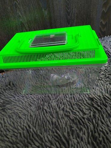 Мыши в Кыргызстан: Пластиковый контейнер-переноска, дом для мышек или небольших улиток