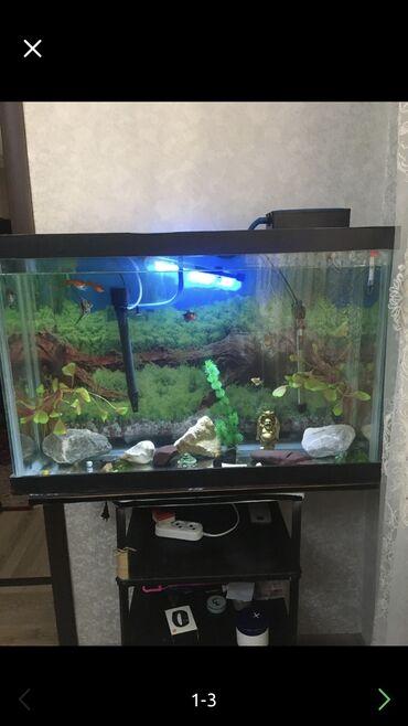 Продаю аквариум 140 литров со всеми устройствами и рыбками.12 рыб боль