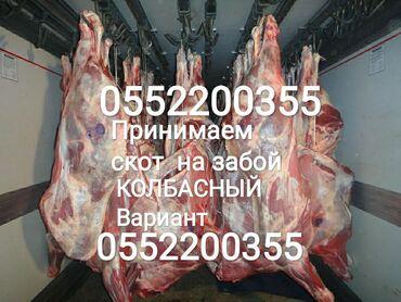 платье в клетку с белым воротником в Кыргызстан: Принимаем в колбасный цех: лошадей бычков тёлок и коров в любом виде в
