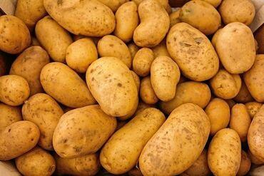 Жели Картошка сатылат отборный 7тонна