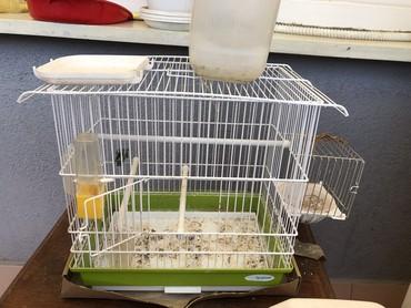 Kućne ptice | Srbija: Kavez za pticice