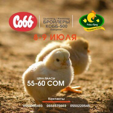 Цыплята бройлеров 8-9июля. По 100% предоплате. Звоните! Цыплята