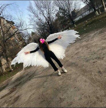 преподаватель танцев в Кыргызстан: Крылья ручной работы,размах крыльев 3метра, длина крыльев 1,5 метра