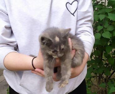 Велосипеды - Кыргызстан: Отдам в хорошие и добрые руки котят есть: три черных два серых и один