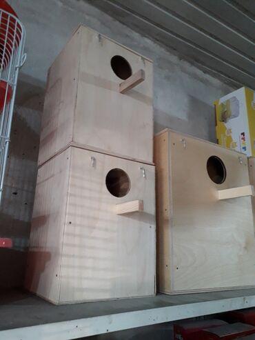 yuva - Azərbaycan: Yuva balaca ve karella quwlari ucun 4 azn. 7 azn